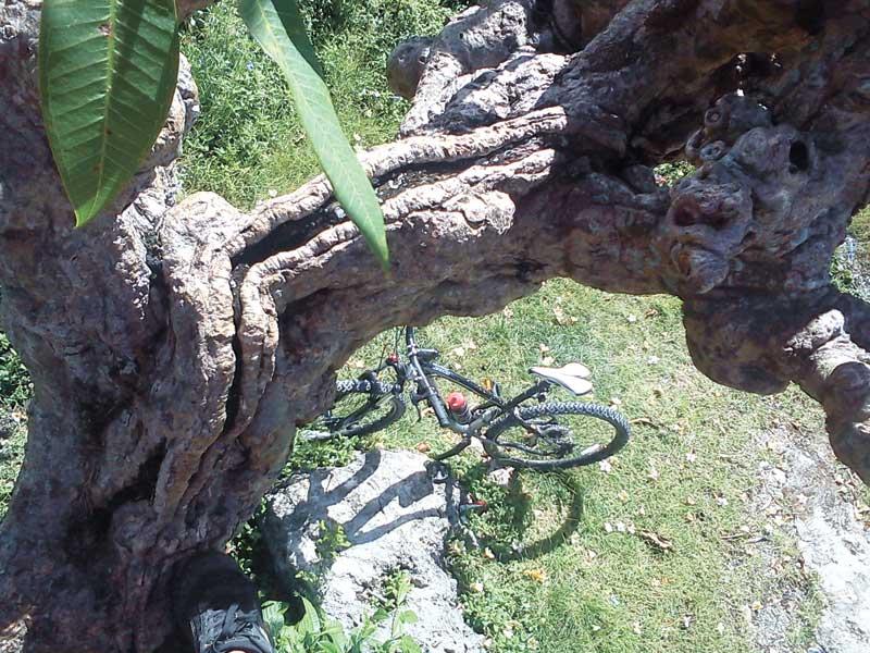 OUTSKIRTS. Ride a bike, climb a tree this Sinulog.