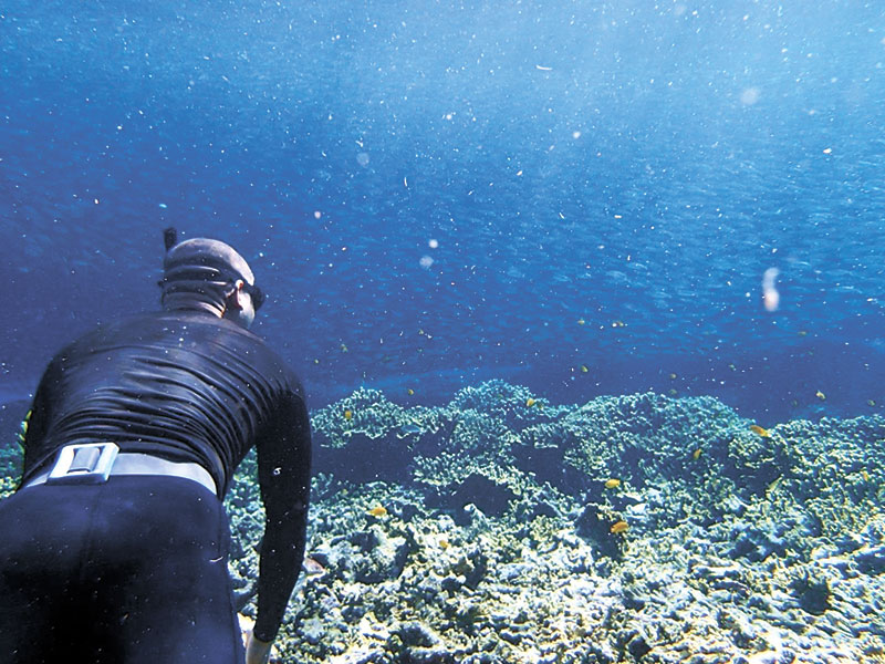 Freediving in Cebu's seas offers sightings of various underwater creatures