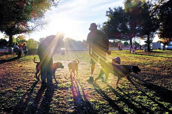 SUNNY WALK. It's such a wonderful sight: owners and their dogs enjoying a sunny afternoon at the park. But ever wondered what's the best time to take your dog for a walk? (AP FOTO)