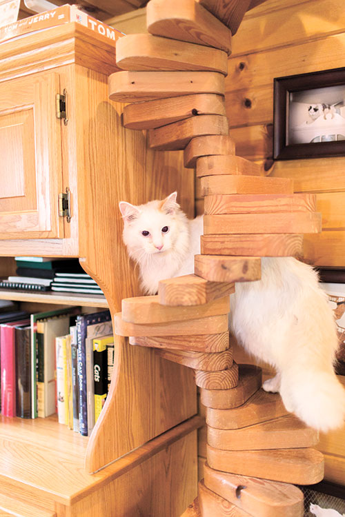 STAIRWAY. A cat stairway can provide on and off ramps for a cat superhighway. (AP PHOTO)