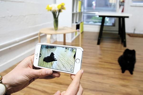 PETCUBE. A phone with the interactive wi-fi pet camera Petcube to watch pet dogs. (AP PHOTO)