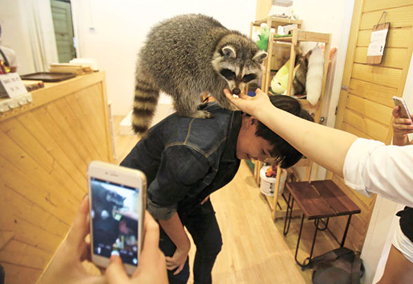 FOX AND MEERKAT. A visitor plays with a fennec fox and meerkat at Little Zoo Cafe in Bangkok. (AP PHOTO)