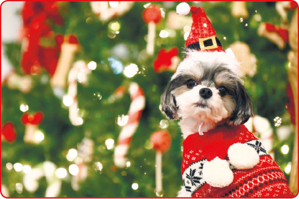 DOGLOOKIN'. This doggie looks great in a scarf sweater and a Santa hat. If you're buying your pets gifts this Christmas, look for stuff that amuses or fits your pet's personality. (AP PHOTO)
