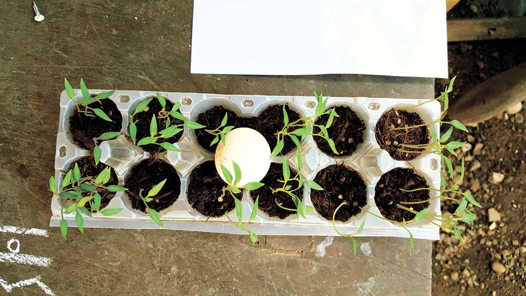 egg-tray-planter