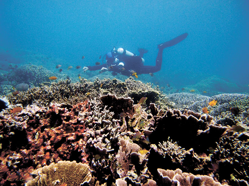 A diver hovering over thick coral cover